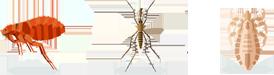 Fleas, Mosquitos, Ticks